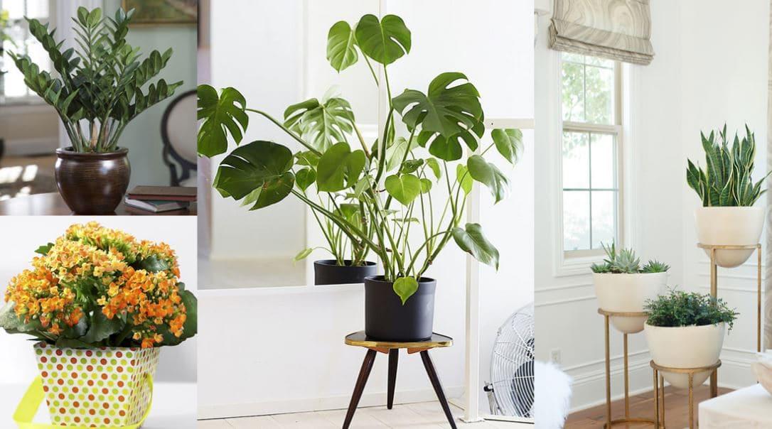 Decoraci n interior con plantas bano muebles carpinteria for Decoracion de interiores monterrey